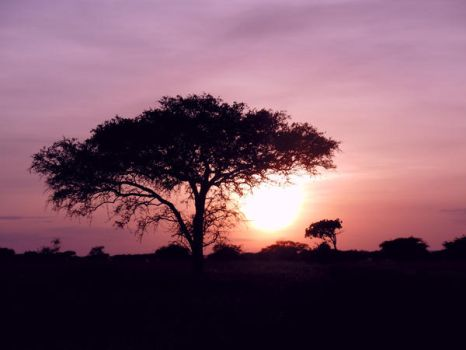 african sunset by NikiljuiceStock
