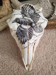 Magpie Inked Sheep Skull by MorRokko
