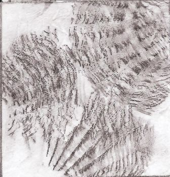 Texture - Rubbings- Natural by Christfawk