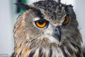 Eagle Owl by ZaraaLeanne
