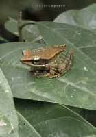 An Amphibian on Leaves by AWaqas