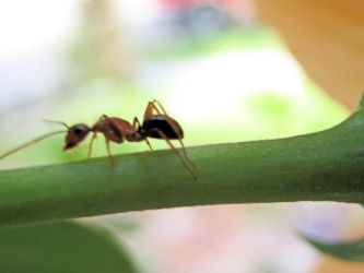 Ant and flower.3 by larissa-stock