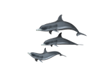 Dolphins Transparent Background by abdelrahman