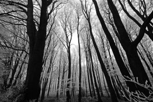 enchanted wood by augenweide