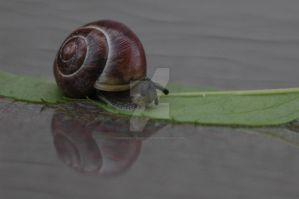 Snail Reflection 1 by MindfullyArtistic