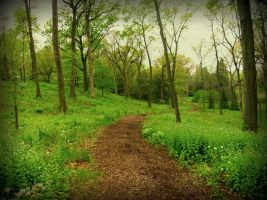 Green Way by Canthgyl