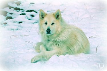 In the Snow - Torin by RavenMoonDesigns