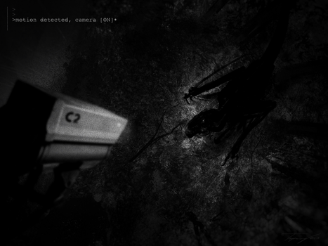 Located- teaser by Tapwing