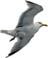 Seagull by RavensLane