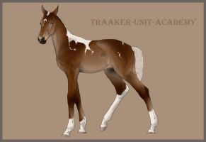 Traaker Import 41 | CLOSED by Pashiino