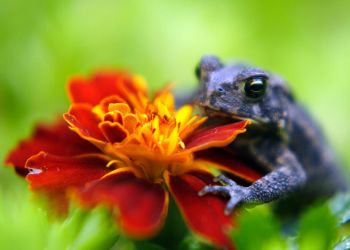 Toad and Flower 1 by Woz1