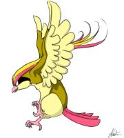 Pidgeot by Mispeled