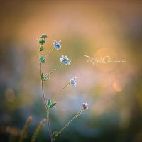 Tiny world by Zelma1