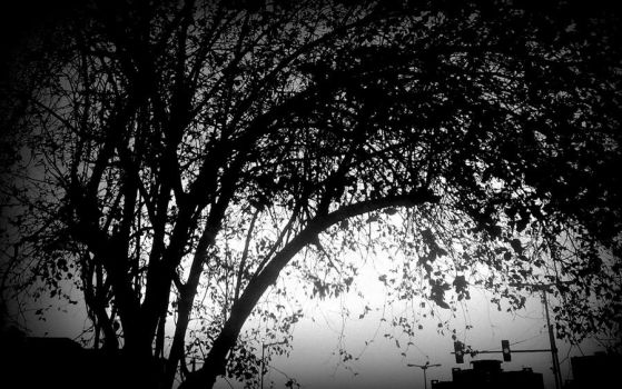 The Tree by bogas04