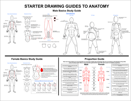 Basic Drawing Guide by AnatneM-Studios