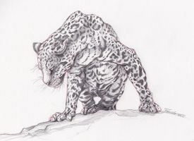 Leopard by Thalathis