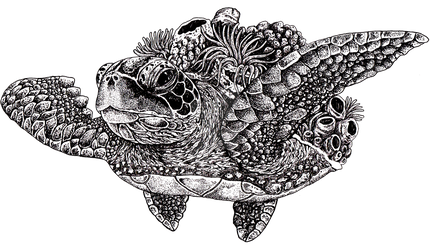 Coral Back Turtle by FromAnEnchantedMind