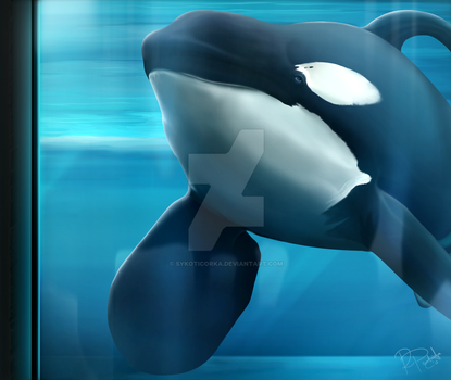 Tilikum by SyKoticOrKa