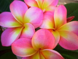 Frangipani Bunch by Emmabro14