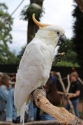 Cockatoo by ditney
