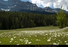 Mountain Meadow 2 by SalsolaStock