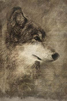 Rustic Wolf Pencil 24x36 by wmartin1963