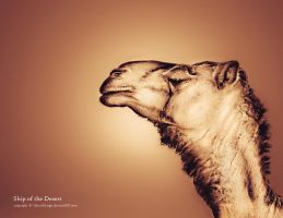 CAMEL by ClassicDesign