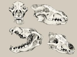 Day 4: Wolf Skulls by Warrior-Song