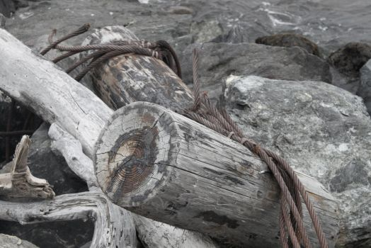Driftwood by wiwriter