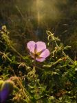 Songs: End of August by marmota-b