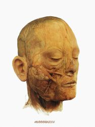 Anatomy of face by MOHSENSEPEHRI