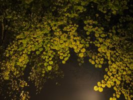 Leaves at night 4 by Inilein