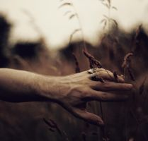 I can touch the summer I can touch the dusk by Peterix