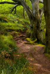 Northumberland Woodland 5 by newcastlemale