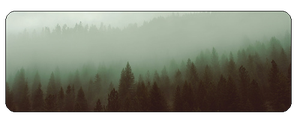 F2u Foggy Forest by Salt-prince-vince