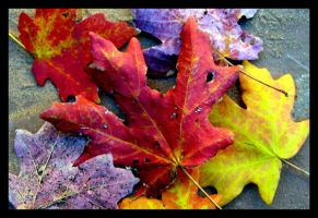 Fall Leaves of Zion by dreamweaver3812