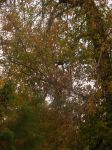 backyard fall images by BlueIvyViolet
