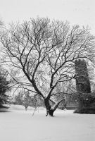 Indian Bean Tree Winter by Earth-Hart