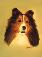 Sheltie - CP dog portrait by worthgold