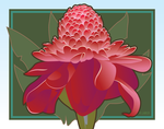Red Torch Ginger by rlaber