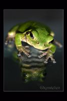 Tree Frog Reflection by UffdaGreg