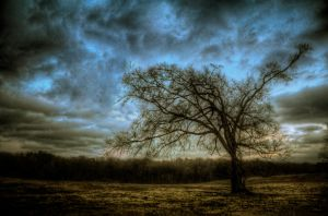 Colonel Glen's Tree HDR by joelht74