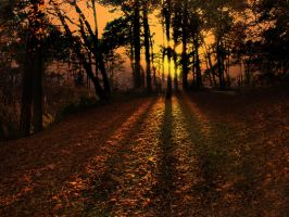 AUTUMN FOREST LIGHT by TADBEER