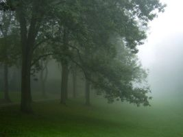 Trees and Fog by serel