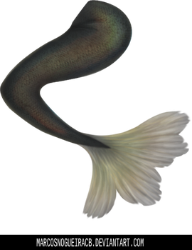 Mermaid tail - Stock by marcosnogueiracb