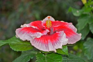 Another red flower by chalkwebdesign