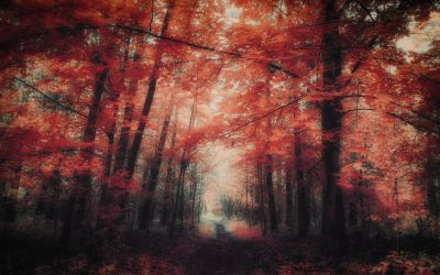 The colors of Autumn - Part X by myINQI