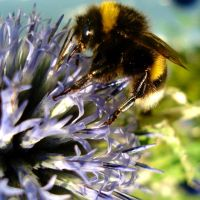 busy bumblebee on a blue globe by Dieffi
