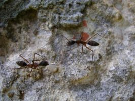 Big ants fight by LuciRamms