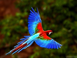 Vibrant Parrot by Chillstice